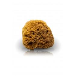 Přírodní karibská houba 1ks